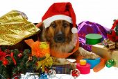 Mixed breed dog has done preparings for christmas poster