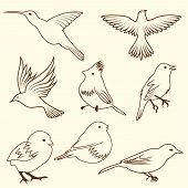 Set of different sketch bird. Vector illustration for design use. poster