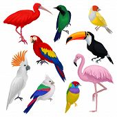Set of various exotic birds. Wild creatures with colorful feathers. Fauna and wildlife theme. Graphic elements for ornithology book, advertising poster or flyer. Detailed vector isolated on white. poster