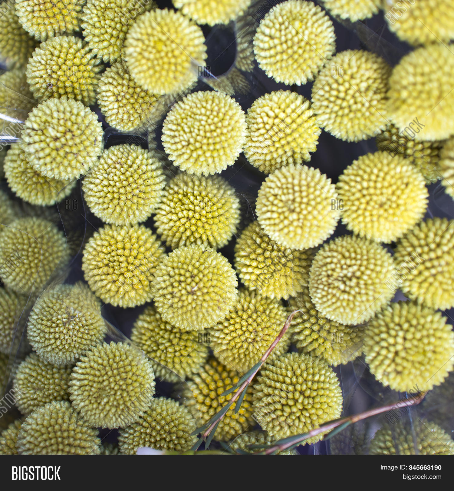 Yellow Flowers Vase Image Photo Free Trial Bigstock