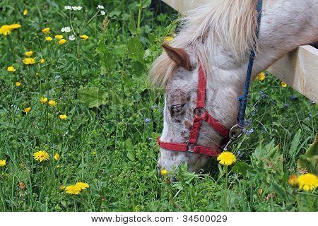 Pony's Springtime Grazing