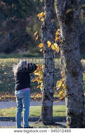 Older Woman In 60s With Long Gray Hair Taking Photos Of Fall Leaves