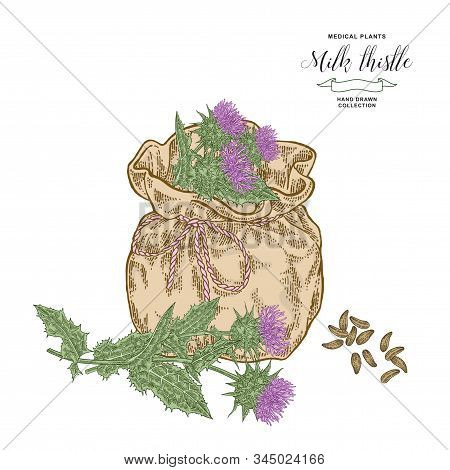 Milk Thistle Plant Hand Drawn. Thistle Flowers And Seeds With Textile Bag. Medicinal Gerbs Collectio
