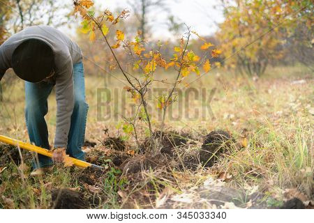 The Man In The Forest Dig Out The Young Tree Sprout With A Shovel