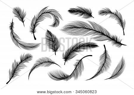 Feathers, Vector Black Silhouettes With Fluffy Plumage Texture. Feather Quills Flying And Falling, A