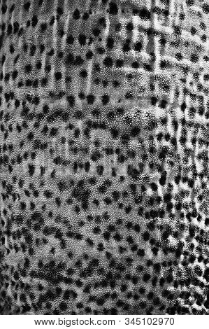 Elephant skin texture abstract background. The skin of the animal. pachyderm poster