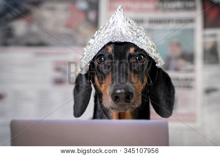 Suspicious Dachshund Dog In Foil Hat With Laptop Looking At Camera, Front View, Blurry Newspapers Wi