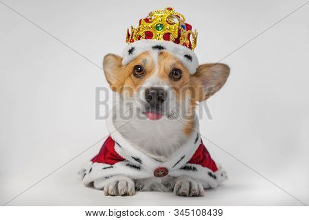 Funny Dog Pembroke Welsh Corgi Teasing By Sticking Out His Tongue, In The Gold Crown And Red Mantles