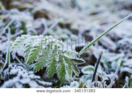 Grass In The Frost. Frost On The Grass In The Morning Sun.winter Natural Plant Background In Cold Bl