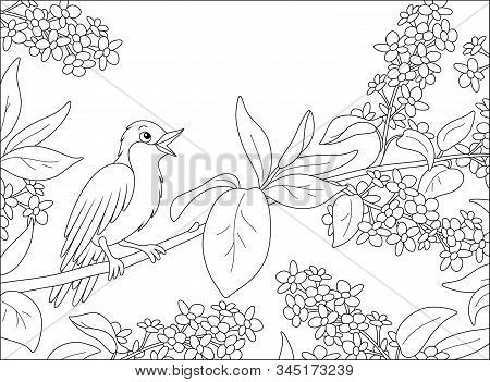 Small Singing Nightingale Perched On A Branch With Flowers Of A Spring Blooming Tree, Black And Whit