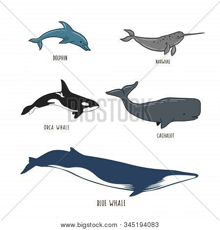 Set Of Sea Animals. Figure Whale, Dolphin, Narwhal, Sperm Whale, Killer Whale. Vector Illustration.