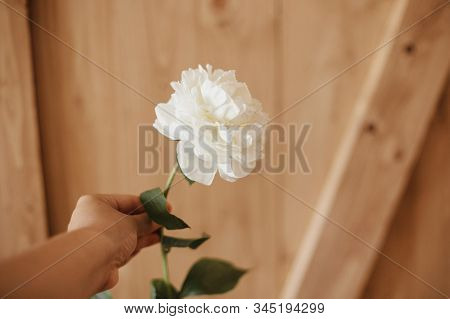 Hand Holding White Peony On Rustic Wooden Background. Florist Hand Arranging White Flowers. Hello Sp