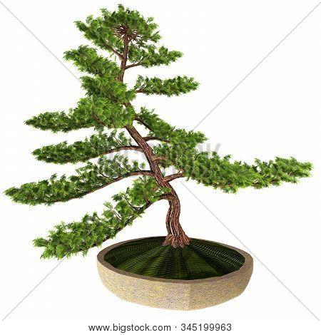 Hinoki False Cypress Bonsai Tree 3d Illustration - This Cypress Tree Is A Favorite Of Japanese Horti
