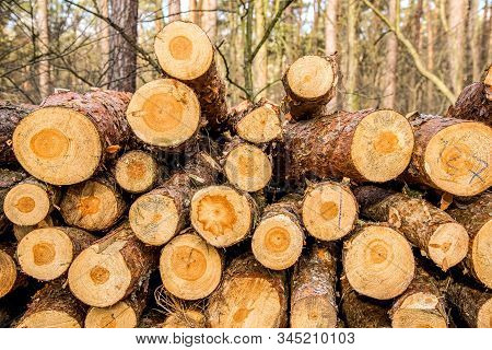 Pile Of Wood In Forest . Chop Wood For Wood Processing