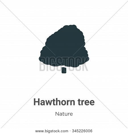 Hawthorn tree icon isolated on white background from nature collection. Hawthorn tree icon trendy an