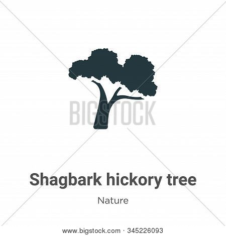 Shagbark hickory tree icon isolated on white background from nature collection. Shagbark hickory tre