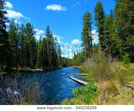 The Downriver Scene - Looking downstream on the Metolius River at Allen Springs Campground - near Camp Sherman, OR