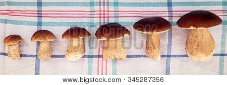 Different Size Of Boletus Edulis On Kitchen Towel In A Row, Delicious Gourmet Porcini Mushrooms, Top