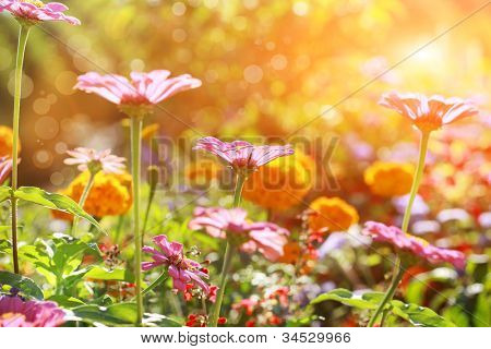 Abstract flowerbed in sunny day, shallow DOF poster