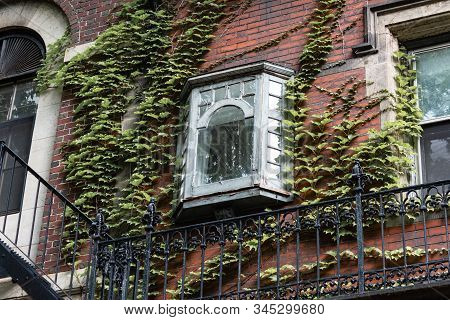 Tiny Bay Window On The Exterior Of A Vine Covered Brownstone, Horizontal Aspect