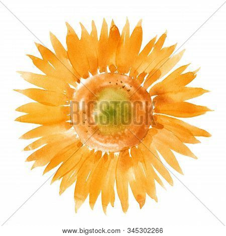 Beautiful Illustration With Hand Drawn Summer Watercolor Sunflowers. Stock Artwork.