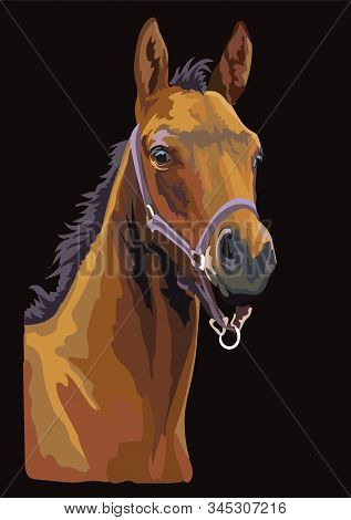 Colorful Bay Foal Portrait With Halter. Foal Head Isolated On Black Background. Vector Drawing  Illu