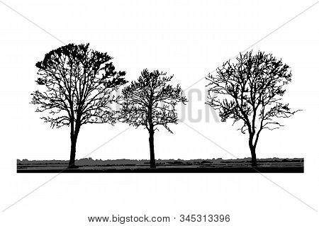 Tree Silhouettes Isolated On White Background. Realistic Set Of Trees Silhouette And Grass, Black Sh