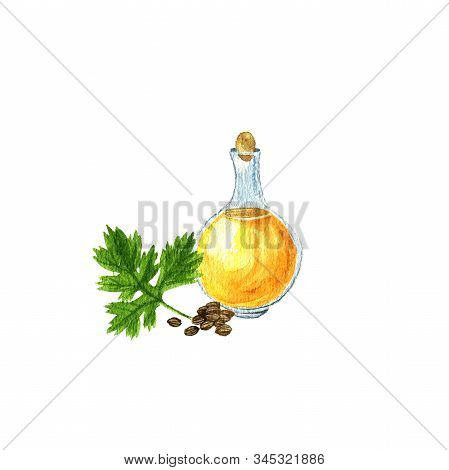 Watercolor Drawing Coriander Seed Oil, Bottle Of Vegetable Oil And Coriander Leaf And Seeds, Hand Dr
