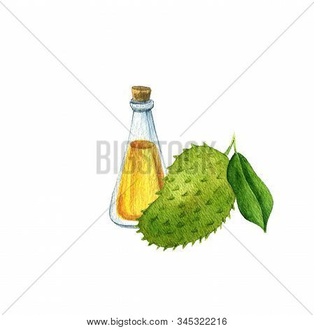 Watercolor Drawing Graviola Oil, Bottle Of Vegetable Oil And Soursop, Hand Drawn Illustration