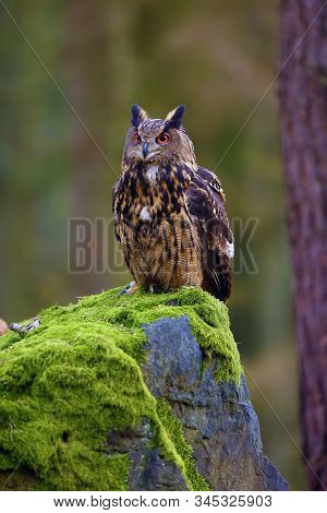 The Eurasian Eagle-owl (bubo Bubo) , Portrait In The Forest. Eagle-owl Sitting In A Forest On A Rock