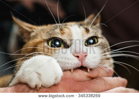 Ferocious Red Cat Bites Its Owner In The Arm With All Its Power