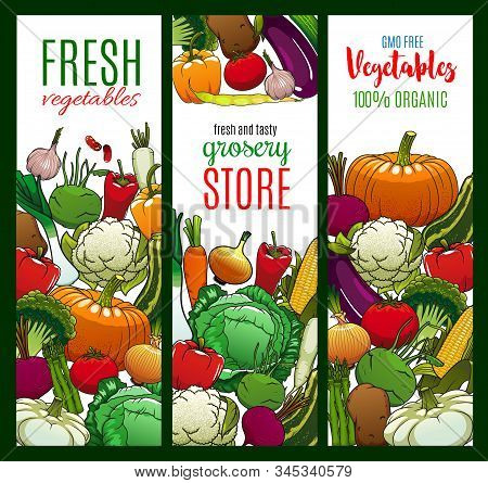 Vegetables, Organic Farm Food Veggies And Gmo Free Cabbages. Vector Carrot, Green Onion, Tomato And