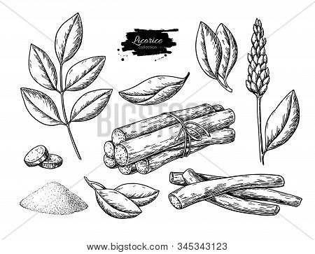 Licorice Vector Drawing. Bunch Of Roots, Plants, Branch With Flower And Leaves. Pile Of Ground Powde