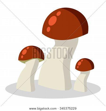 Forest Mushroom, Kinds Of Mushrooms. Boletus, Mushroom Chanterelle, Orange-cap Boletus