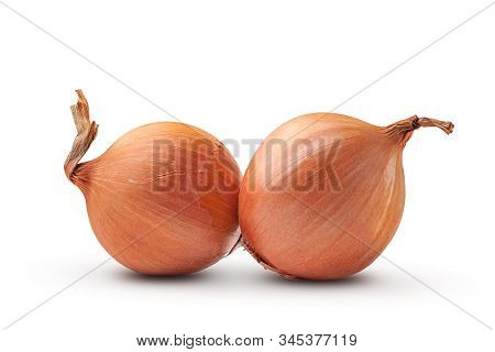 Onion. Two Fresh Bulbs Of Organic Onion. Onion Isolated On White Background. Organic Products.