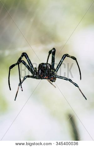 A Black And Brown Colour Spider Is Photographed Close Up, Macro Picture,natural Background,spider An