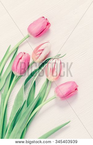 Tender Pink Tulips On White Wooden Table With Copy Space For Your Text Or Congratulations. Greeting