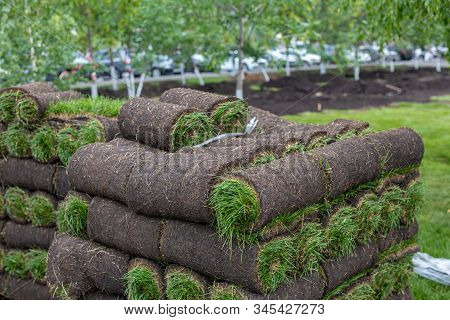 Turf Grass Roll, Green Grass Carpet In Roll For Lawn. Stack Of Turf Grass Rolls For The Landscaping