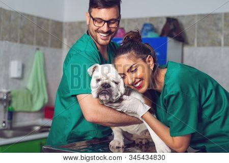 Two Veterinary Doctors With Dog During The Examination In Veterinary Clinic