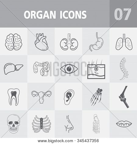 Human Anatomy Outline Icons,vector Icons Set Of Internal Organs And Bone. - Medicine And Health Symb