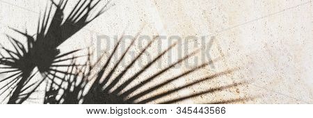 Black Shadow Of Tropical Plants On Tiles. Beautiful Style Of Light Background. Sunny Summer Day. Ban