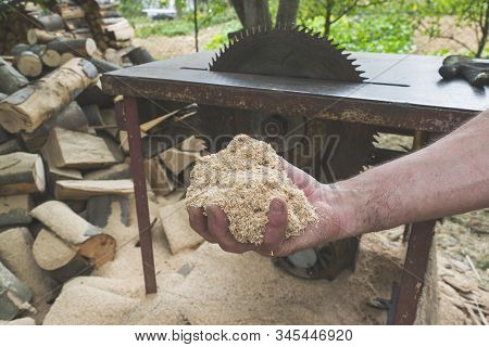 Man Holding Pile Of Fresh Sawdust In His Hand, With Chopped Wood And Circular Table Saw In The Backg