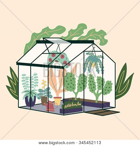 Glass Modern Greenhouse With Garden Plants. Garden Curly Ivy And Flower Pots. Winter Glass Garden, H