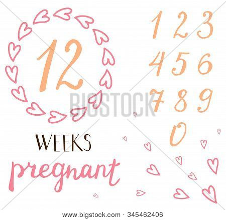 Pregnancy Milestone Cards. Beautiful Flora Frame For The Number Of Weeks Of Pregnancy.hand Writing L