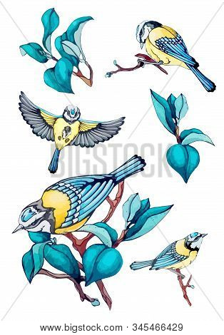 Collection Vector Stock Illustration Of Blue Bird, Tit Fly, Branch, Navy Blue Leaves In Vintage, Wat