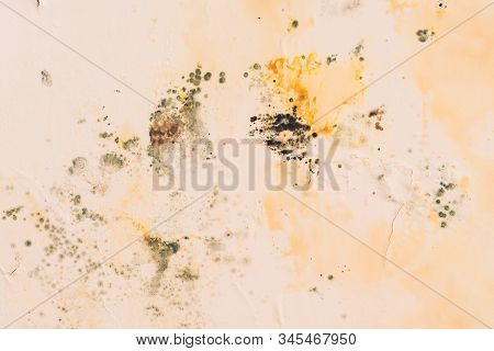 Grunge Concrete Background With Fungus Spots. Old Wall Background. Fungus, Bacteria On Color Surface