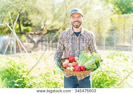 Smiling Farmer With Homegrown Vegetables In Basket Standing At Farm On Sunny Day