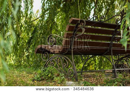 Soft Focus Back Side Wooden Bench In Nature Scenery Beautiful Outdoor Park Calm Empty Place Without