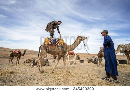 A Man Standing On His Dromedary Camel To Show Off On Agafay Desert , Marrakech, Morocco