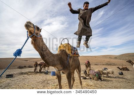 A Man  Jumping From  His Dromedary Camel To Show Off On Agafay Desert , Marrakech, Morocco